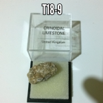 Crinoidal Limestone natural mineral rock specimen in display box